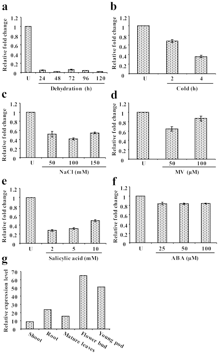 Transcript analysis of CaSUN1 . Determination of CaSUN1 transcript levels by qRT-PCR in response to (a) dehydration, (b) cold, (c) NaCl, (d) MV, (e) salicylic acid, and (f) ABA. Relative fold change in mRNA level is shown on Y-axis. (g) The tissue-specific expression of CaSUN1 was analyzed using high throughput transcriptomic data from Chickpea Transcriptome Database ( http://59.163.192.90:8080/ctdb/ ).