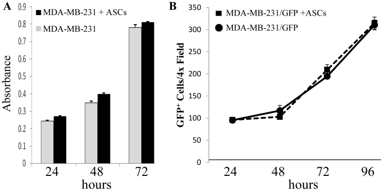 The effect of ASCs on the growth of MDA-MB 231 cells. A. MDA-MB-231 were cultured in the bottom well of a Boyden Chamber and ASCs were cultured in the insert. Growth of MDA-MB-231 cells was assessed using the MTT assay. B. 2.5×10 4 ASCs were cultured in 6 well plates for 24 hrs. prior to addition of MDA-MB-231-GFP breast cancer cells at a 1∶1 ratio. Bright field and fluorescent microscopy photographs were taken on days 1–4 after addition of the MDA-MB-231 cells. Data are representative of experiments using three different ASC donors.