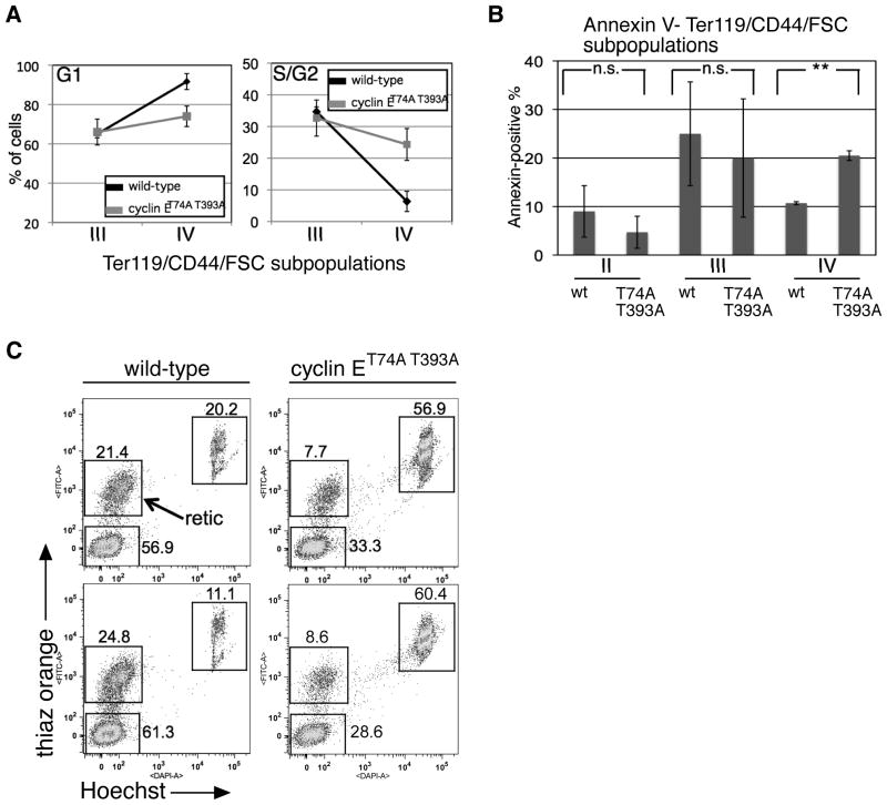 Cell cycle arrest and survival during terminal erythroid maturation requires Fbw7-dependent cyclin E regulation (A, B) Cell cycle distributions (A) and apoptotic populations using Annexin V staining (B) were measured in bone marrow erythroid cells gated based on CD44/Ter119/FSC as in Figure 1B . Averaged data from six wild-type and cyclin E knock-in mice are displayed. Error bars indicate standard deviation. ** - p-value