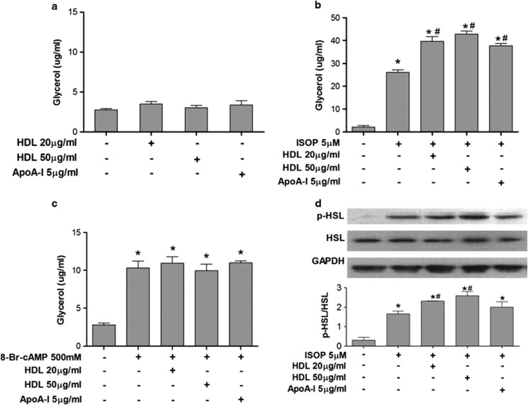 HDL promotes catecholamine but not cAMP-stimulated lipolysis in 3T3-L1 adipocytes. 3T3-L1 adipocytes at day 10 after differentiation were cultured in Dulbecco's modified Eagle's medium containing fatty acid-free 0.2% bovine serum albumin for 24 h, and followed by incubation with or without lipolytic stimuli, 5 μ M ISOP or 500 m M 8-Br-cAMP, and with or without human HDL and apoA-I in indicated concentrations for 4 h. Net release of glycerol into conditioned media was measured as the indicator of lipolysis. Whole-cell lysates were prepared and immunoblotted for p-HSL, HSL and glyceraldehyde 3-phosphate dehydrogenase (GAPDH) as described in Materials and methods section. ( a ) Basal lipolysis of 3T3-L1 adipocytes with HDL and apoA-I. ( b ) Catecholamine ISOP-stimulated lipolysis with HDL and apoA1. ( c ) cAMP-stimulated lipolysis with HDL and apoA-I. ( d ) Immunoblots of p-HSL, HSL and GAPDH in 3T3-L1 adipocytes under ISOP stimulation with HDL and apoA-I (upper panel). Densitometric data for p-HSL/HSL (lower panel). The image is one representative immunoblot from three independent experiments. The asterisk denotes statistically significant differences compared with control (analysis of variance (ANOVA), P