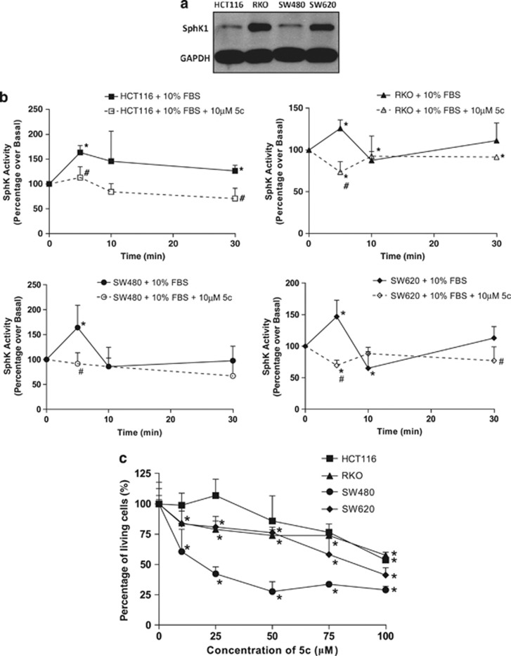 Sphingosine kinase 1 (SphK1) inhibition by compound 5c (5c) reduces the viability of colon cancer cells. ( a ) SphK1 protein levels in HCT116, RKO, SW480, and SW620 cells were measured by western blot with antibodies against SphK1. Glyceraldehyde 3-phosphate dehydrogenase was used as a loading control. ( b ) Whole-cell lysates were prepared respectively from HCT116, RKO, SW480, and SW620 cells pre-treated with or without 10μ M  5c, and stimulated with 10% fetal bovine serum (FBS) for up to 30min. Equal amounts of protein lysates were measured for SphK activity using the fluorometric SphK Assay. * P