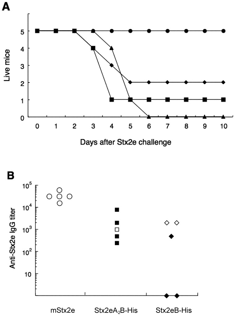 A. Survival profile of mice immunized i.n. with mStx2e (●), Stx2eA 2 B-His (■) or Stx2eB-His (♦), after i.p. injection with 0.1 µ g of the native toxin Stx2e. Mice administered PBS (▲) were used as negative controls. B. Anti-Stx2e IgG titers in individual sera and protection from lethal toxin challenge for mice immunized i.n. with mStx2e (●), Stx2eA 2 B-His (■) and Stx2eB-His (♦). All serum samples from immunized mice on day 178 were assessed for anti-Stx2e IgG titer. Open symbols represent sera from protected mice.