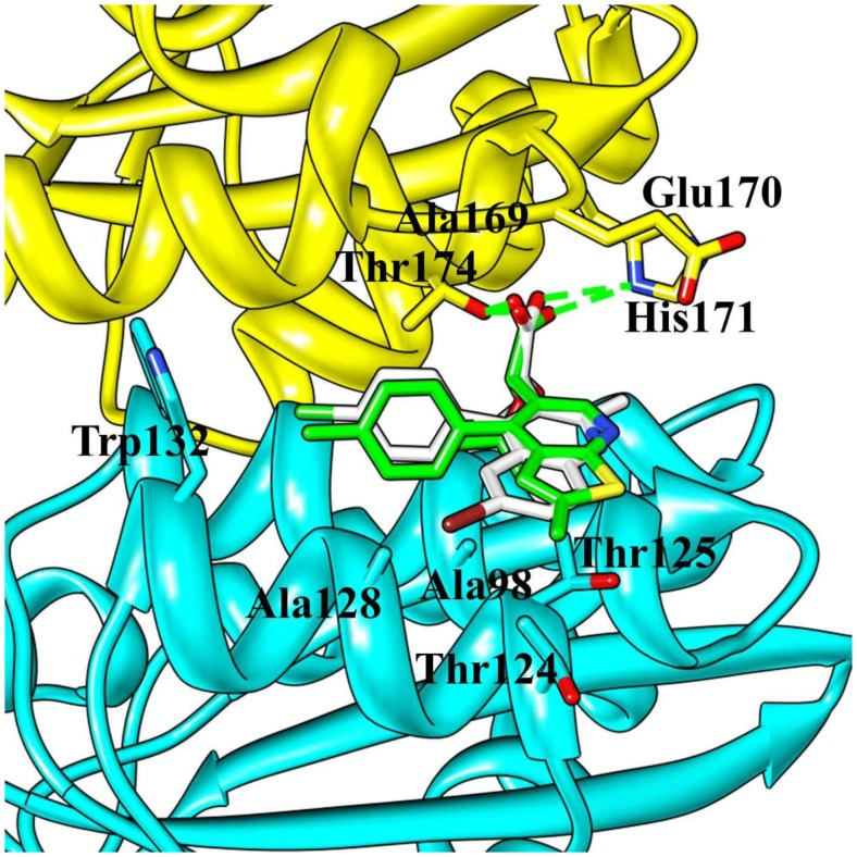 Comparison of the computational docking of CX14442 in the HIV-1 IN CCD dimer versus the reported crystal structure of BI-1001 bound in HIV-1 IN CCD dimer (PDB ID code 4DMN). The protein is shown in the cartoon representation; the two monomers are colored yellow and cyan, respectively. The LEDGINs are represented in gray stick. Hydrogen bond interactions are denoted by dotted green lines.