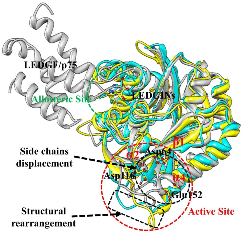 Structural model of LEDGF/p75 in complex with HIV-1 IN CCD dimer. The averaged structure extracted from the MD trajectory was used. The protein is shown in cartoon representation with two monomers in yellow and cyan. The side chains of the LEDGF/p75 amino acids are shown as gray sticks. Hydrogen bond interactions are denoted by dotted green lines.