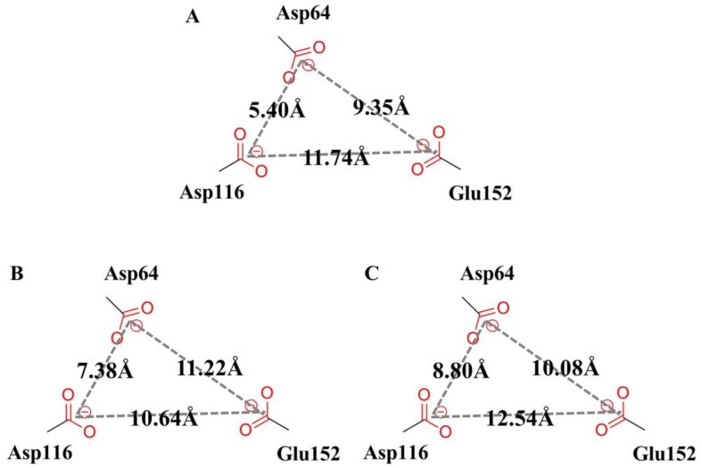 Scheme of the active site DDE motif (Asp64, Asp116, and Glu152) models for (A) LEDGF/p75, (B) BI-1001 and (C) CX14442 bound HIV-1 IN complexes. The measured distances between the centroid of the side chains of the three conserved catalytic residues were labeled in each model.