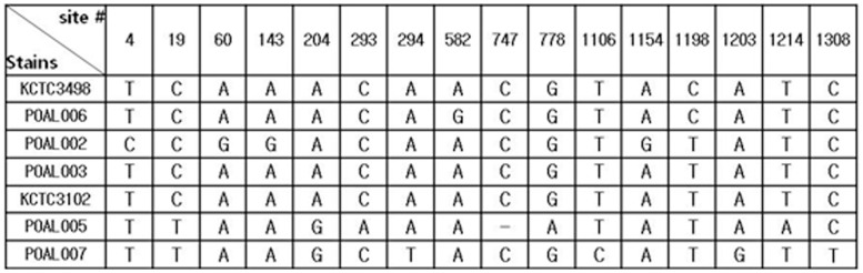 Base changes in the 16S rRNA sequences of L. brevis strains.