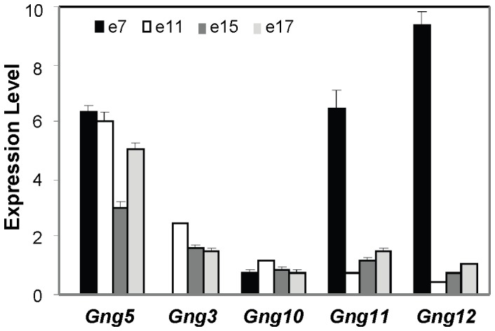 Non-redundant function of Gng5 gene during development. As shown by qPCR analysis on a normalized mouse cDNA panel containing different gestational stages (Mouse MTC Panel1, Clontech), multiple Gng family members are expressed at developmental stages relevant to neural and cardiac development. All primer sequences can be found in Table S1 .