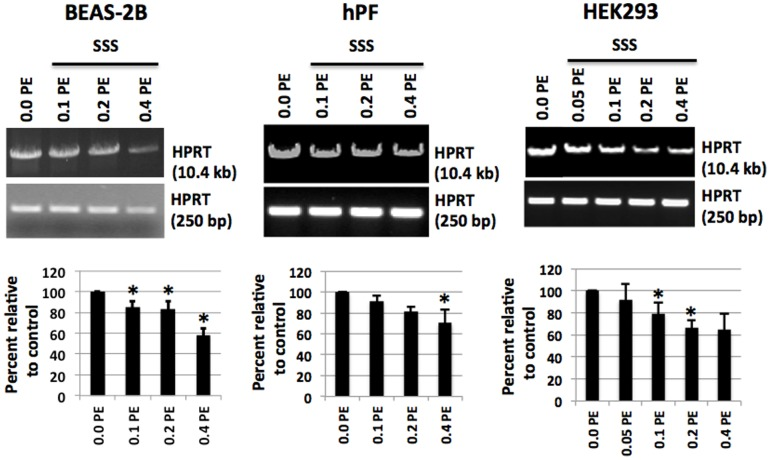 Increased oxidative DNA damage in various human cells. Following exposure to a series of dilutions of SSS–laden DMEM for 24 h, DNA isolation and digestion with Fpg and Nei followed by qPCR for amplification of HPRT large and a short fragment (LA-QPCR assay). Three cell lines, HEK293, hPF and BEAS-2B, all exhibited a dose-response relationship between levels of oxidative DNA damage and the SSS doses used in the LA-QPCR assay. PE: puff equivalents (the smoke from one puff in 1 ml of medium).