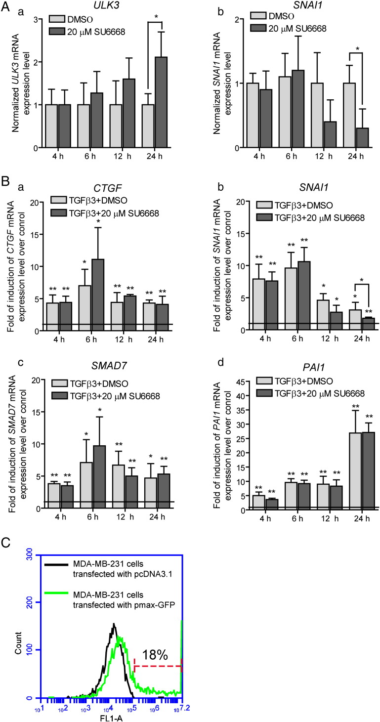 (A, B) MDA-MB-231 cells were treated with 10 ng/ml of TGF-β3 in the presence of DMSO or 20 μM SU6668 during the indicated periods of time. Expression levels of ULK3 , SNAI1 , CSMAD7 and PAI were analyzed by qPCR, normalized with GAPDH mRNA levels and set as 1 in the control cells treated with DMSO at the respective time point (indicated as a baseline on panel B). The data from other samples were calculated relative to control. The data are presented as an average mean ± S.D.; *—p