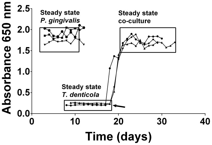 Continuous culture of P. gingivalis and T. denticola mono- and co-cultures. Cell density of P. gingivalis and T. denticola mono- and co-cultures from three independent continuous cultures in OBGM with the dilution rate of 0.044 h −1 and mean generation time of 15.8 h as determined by measuring A 650 nm . The arrow shows the addition of P. gingivalis to a steady state T. denticola culture.