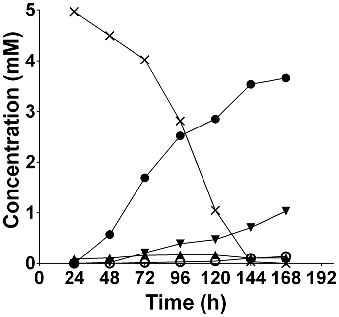 The extracellular products of T. denticola [U- 13 C]glycine fermentation. [U- 13 C]glycine (5.00 mM) was added to a 24 h T. denticola culture and aliquots were collected every 24 h, filtered and the identity and the quantity of the 13 C-labeled compounds was determined using NMR spectroscopy. black cross, [U- 13 C]glycine; black circle, [U- 13 C]acetate; black inverted triangle, dual or uniformly-labeled lactate; black triangle, [U- 13 C]bicarbonate; white circle, dual or uniformly-labeled alanine.