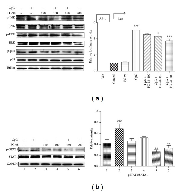 FC-98 inhibited activation of MAPK and STAT1 to downregulate the CXCL-10 expression. (a) Left: BMDCs were pretreated with FC-98 for 2 h, followed by 30 min CpG treatment; the phosphorylation of of MAPK (ERK, JNK, and p38) signaling pathway was analyzed by western blot. The results shown are representative experiments from three independent assays. Right: BMDCs were cotransfected with 100 ng pAP-1 luciferase reporter plasmid and 10 ng pRL-TK-Renilla luciferase. Total amounts of plasmid DNA were equalized using empty control vector. After 24 h of culture, cells were pretreated with FC-98 for 1 h and then stimulated with 1 μ M CpG for another 6 h. Luciferase activity was measured and normalized by Renilla luciferase activity. Data are shown as mean ± SD of three independent assays. ### P