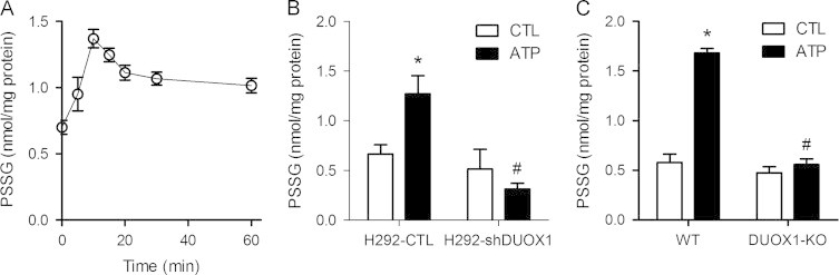 DUOX1 activation promotes protein S -glutathionylation. (A) H292 cells were stimulated with 100 µM ATP for the indicated periods of time, after which cells collected in lysis buffer containing 50 mM NEM. Protein lysates were precipitated with TCA and incubated with DTT to reduce protein mixed disulfides with GSH (PSSG), and GSH was analyzed by HPLC after mBrB derivatization. (B) Analysis of PSSG in unstimulated or ATP-stimulated (100 µM; 15 min) H292-CTL or H292-shDUOX1 cells. (C) PSSG analysis in unstimulated or ATP stimulated MTE cells from wild-type (WT) or DUOX1-deficient (DUOX1-KO) mice. Mean±S.E. from 4 replicates in 2 separate experiments. : p
