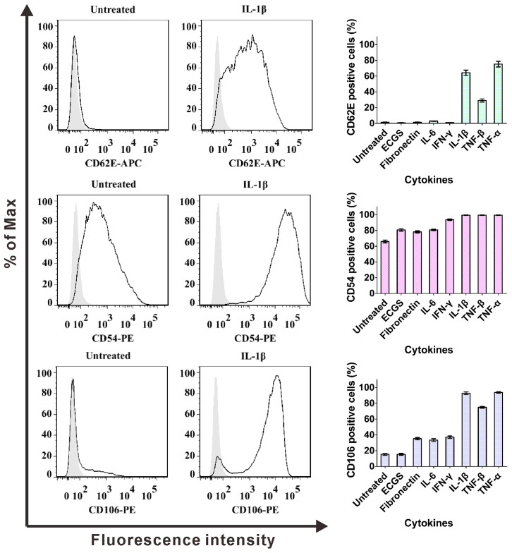 Flow cytometric analysis of cytokine-stimulated CD62E (E-selectin), CD54 (ICAM-1) and CD106 (VCAM-1) expression by HUVECs. HUVECs was cultivated with IL-1β (1 ng/mL), TNF-β (10 ng/mL), TNF-α (10 ng/mL), IL-6 (10 ng/mL), <t>IFN-γ</t> (10 ng/mL), ECGS (100 μg/mL) and fibronectin (100 ng/mL), respectively, for 4 h. Expression of CD62E, CD54 and CD106 were detected by flow cytometry using silver area as isotype controls. Bar graph shows the percentage of positive cells (right panels), contour polt analysis (left panels) shows CD62E + , CD54 + and CD106 + cells, in comparison with isotype controls. Bars represent the mean ± SEM (n = 3).
