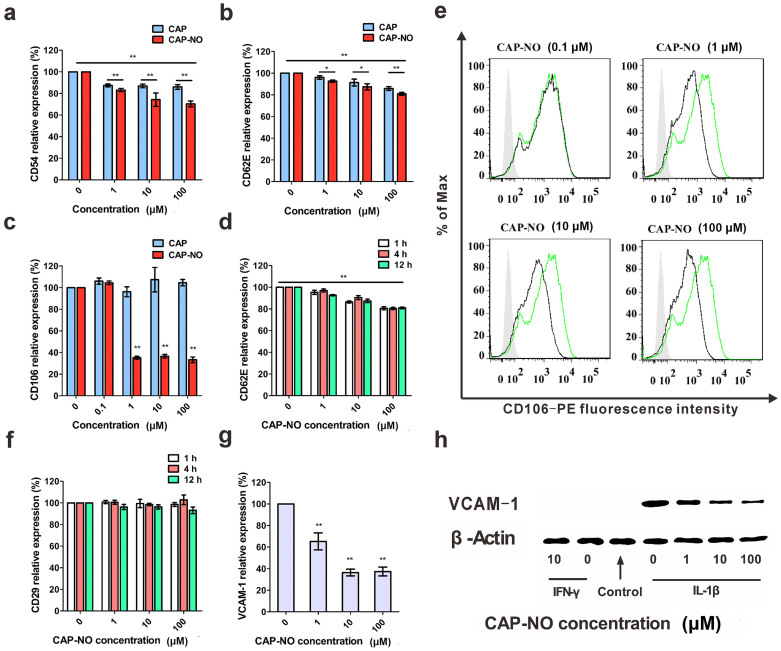 Flow cytometric and western blot analyses of effects of CAP-NO and CAP on CAMs. HUVECs were pretreated with 1 ng/mL IL-1β for 4 h followed by incubation with CAP-NO or CAP for another 12 h (unless otherwise stated). Flow cytometric analysis showed significant inhibition by CAP-NO on expression induced by IL-1β (1 ng/mL) of ICAM-1 (a), E-selectin (b), and VCAM-1 (c). Results are expressed as the mean fluorescence intensities and calculated as percentage of controls. (d) Effects of CAP-NO on E-selectin expression at indicated time points. (e) Expression of VCAM-1 determined by flow cytometry using green curve as a control (IL-1β only), and silver area is an isotype control. (f) Effects of CAP-NO on CD29 expression at indicated time points. (g and h) Western blot analysis of VCAM-1 expression by HUVECs pretreated with IFN-γ (10 ng/mL) or IL-1β (1 ng/mL) for 4 h followed by incubation with CAP-NO (0, 1, 10 and 100 μM) for another 12 h. Band intensity was quantified by using Image Lab analysis software, and calculated as percentage of controls (IL-1β only). Bars represent the mean ± SEM (n = 3); *, P