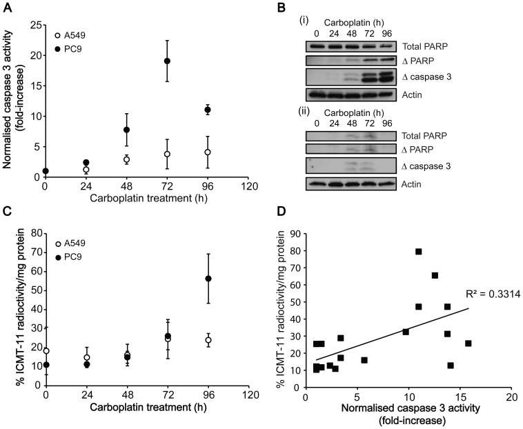 Temporal changes in cell death markers and 18 F-ICMT-11 uptake after carboplatin treatment. A: Time course of changes in caspase 3/7 activity following carboplatin treatment. B: Western blot analysis of the levels of uncleaved PARP, cleaved PARP and cleaved (active) caspase 3 post 50 µM carboplatin treatment (0–96 h) in PC9 (i) and A549 cells (ii). C: Temporal changes in 18 F-ICMT-11 uptake in cells following carboplatin treatment. D: Correlation between caspase 3 activity and 18 F-ICMT-11 uptake in PC9 cells.