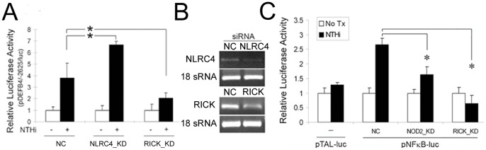 Involvement of NLRC4 and RICK in NTHi-induced human β-defensin 2 up-regulation. (A) Luciferase assays show that NTHi lysate-induced human β-defensin 2 up-regulation is enhanced by silencing of NLRC4 (a <t>NOD2</t> inhibitor) but is inhibited by silencing of RICK that is downstream to NOD2 in the HMEEC cells. NC: a control group transfected with a nonspecific siRNA, KD: a group transfected with a gene-specific siRNA. (B) <t>RT-PCR</t> analysis showing siRNA-mediated inhibition of NLRC4 and RICK expression in the HMEEC cells. (C) Luciferase assays demonstrate that NTHi lysate-induced NF-κB activation is inhibited by the siRNAs specific to NOD2 and RICK in the HMEEC cells. pTAL-luc: a control vector containing the firefly luciferase gene with a TATA-like promoter region from the Herpes simplex virus thymidine kinase promoter, pNFκB-luc: a vector containing multiple copies of the NF-κB consensus sequence fused to pTAL-luc, Tx: treatment. Results were expressed as fold-induction, taking the value of the non-treated group as 1. The experiments were performed in triplicate and repeated twice. Values are given as the mean ± standard deviation (n = 3). *: p