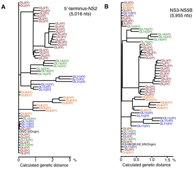 Phylogenetic trees of genome-length HCV RNA populations obtained in long-term cell culture. The phylogenetic trees are depicted on the basis of nucleotide sequences of all cDNA clones obtained by 0-year, 2-year, and 4-year cultures of OL, OL8, OL11, and OL14 cells. (A) The 5′-terminus-NS2 regions of genome-length HCV RNA. ON/C-2 indicates the original sequences of the 5′-terminus-NS2 regions of ON/C-5B/QR,KE,SR RNA [21] . (B) The NS3-NS5B regions of genome-length HCV RNA. O/3-5B/QR,KE,SR indicates the original sequences of the NS3-NS5B regions of ON/C-5B/QR,KE,SR RNA [21] .