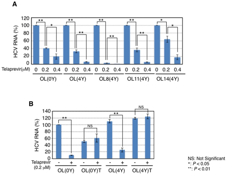 Sensitivity to telaprevir of the 4-year cultured genome-length HCV RNA-replicating cells. (A) Telaprevir sensitivities on genome-length HCV RNA replication in OL(4Y), OL8(4Y), OL11(4Y), and OL14(4Y) cells. OL(0Y) cells were used as a control. The cells were treated with telaprevir for 72 h, and then the levels of intracellular genome-length HCV RNA were quantified by LightCycler PCR. (B) Telaprevir-treated OL(0Y) and OL(4Y) cells (designated as OL(0Y)T and OL(4Y)T, respectively) became telaprevir-resistant easily. Telaprevir treatment and quantitative RT-PCR were preformed as shown in (A).