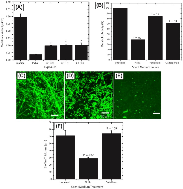 Activity of Pichia spent medium (PSM) against fungal biofilms. (A) Effect of Pichia cells on the ability of Candida to form biofilms. Candida and Pichia were co-incubated [ Candida ∶ Pichia (C∶P) = 3∶1, 1∶1, or 1∶3] and biofilm formation was monitored (* P ≤.002, compared to Candida or Pichia controls). (B) Effect of media supernatant obtained from Pichia, Penicillium, or Cladosporium on Candida biofilms. Mean ± SD of ≥3 separate experiments. (C–E) Confocal microscopy images of Candida biofilms formed in presence of (C) no media supernatant, (D) Penicillium supernatant or (E) Pichia supernatant. (F) Thickness of biofilms formed in presence of media supernatant of Pichia or Penicillium .