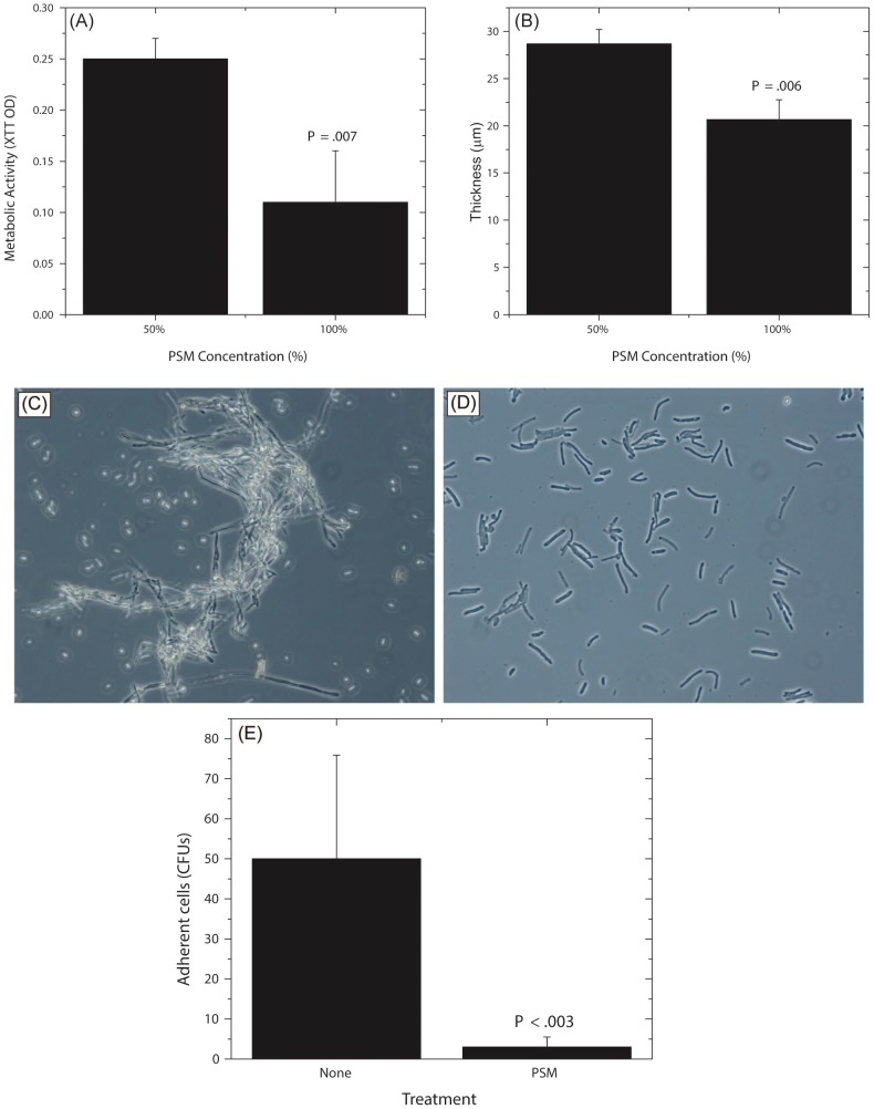 Dose dependent activity of PSM, and its effect on Candida germination and adhesion. Effect of undiluted and diluted (50%) PSM on (A) metabolic activity and (B) thickness of Candida biofilms was assessed. (C) Germination in Candida grown in SDB, exposed to fetal bovine serum, (D) Stunted germ tubes formed by Candida exposed to Pichia supernatant (Magnification 20X), (E) Effect of PSM on the ability of Candida (grown in SDB) to adhere to solid substrates. (SDB - Sabouraud dextrose broth.)
