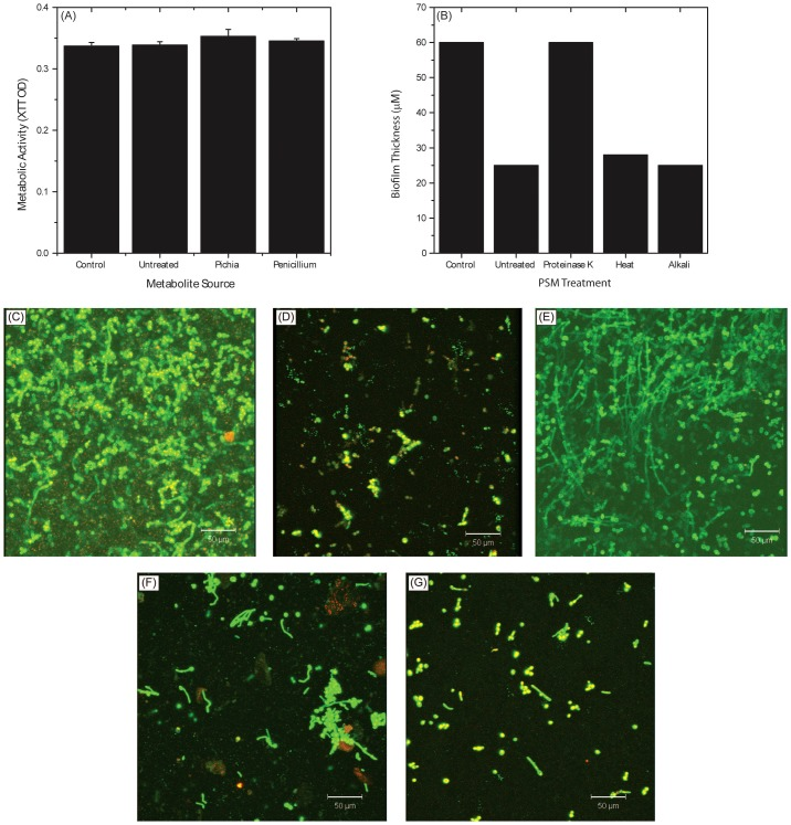 Biochemical characterization of Pichia spent medium. (A) Metabolic activity of Candida biofilms exposed to metabolites extracted from spent media of Pichia, Penicillium, or media control. (B) Effect of PSM exposed to proteinase, heat, or alkali on Candida biofilms. Confocal images show architecture of Candida biofilms exposed to (C) no PSM (control), (D) untreated PSM, (E) proteinase-K treated PSM, (F) heat, or (G) alkali.