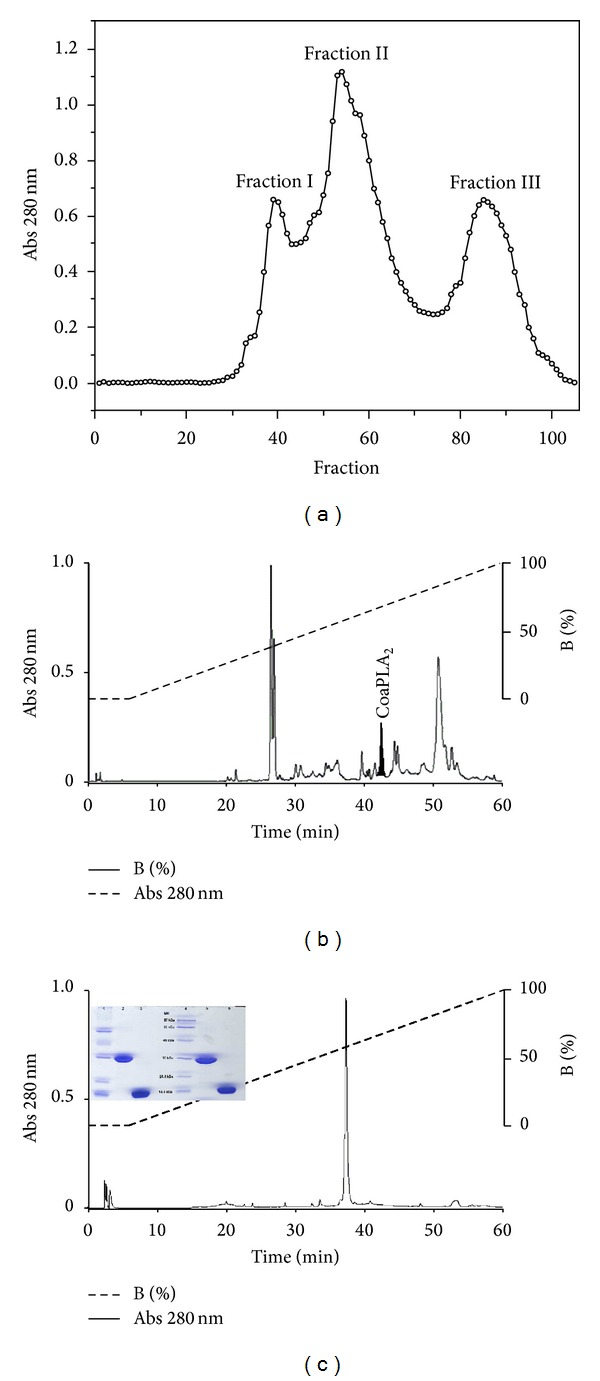 Isolation of CoaPLA 2 from Crotalus oreganus abyssus venom. (a) Profile obtained by gel chromatography on a G75-Sephadex column. Fraction II, presenting phospholipase activity. (b) Lyophilized fraction II was homogenized and centrifuged and subjected to reverse phase HPLC using an analytical <t>C18</t> column. (c) Assessment of purity of RP-HPLC under the same conditions used in (b). Electrophoretic analysis shows the homogeneity of the CoaPLA 2 isolated from the venom of Crotalus Oreganus abyssus : Lines 1 and 4: standard molecular weight; Lines 2 and 5: PAGE under nonreduced conditions; Lines 3 and 6: PAGE under reduced conditions (SDS-PAGE).