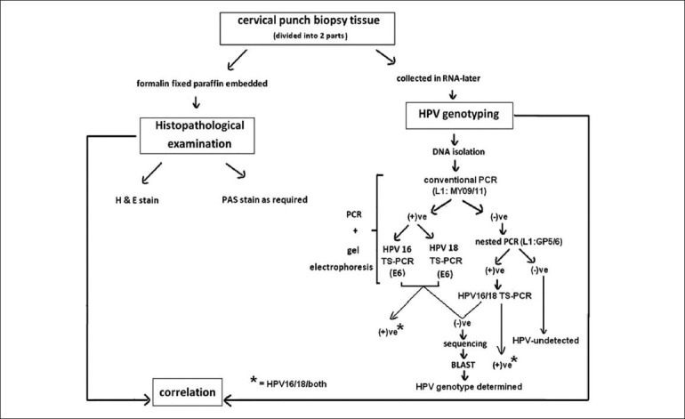 Flow chart depicting study design. TS-PCR: Type-specific polymerase chain reaction, HPV: Human papillomavirus, H and E: Hematoxylin and eosin, PAS: Periodic Acid-Schiff