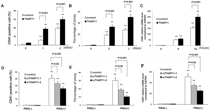 THAP11 accelerates megakaryocytic differentiation of K562 cells induced by PMA. THAP11 lentivirus infected K562 cells (THAP11-LV) and control cells were treated with 10 nM PMA for the indicated lengths of time. CD41 + cells (A) and percentage of 4N cells (B) were analyzed using FACS. The CD61 mRNA level was measured by real-time PCR analysis (C). (D) THAP11 siRNA lentivirus infected-K562 cells or control K562 cells were treated with 10 nM PMA for 3 days. Then CD41 + cells and the percentage of 4N cells (E) were analyzed using FACS. (F) The CD61 mRNA level was measured using real-time PCR analysis.