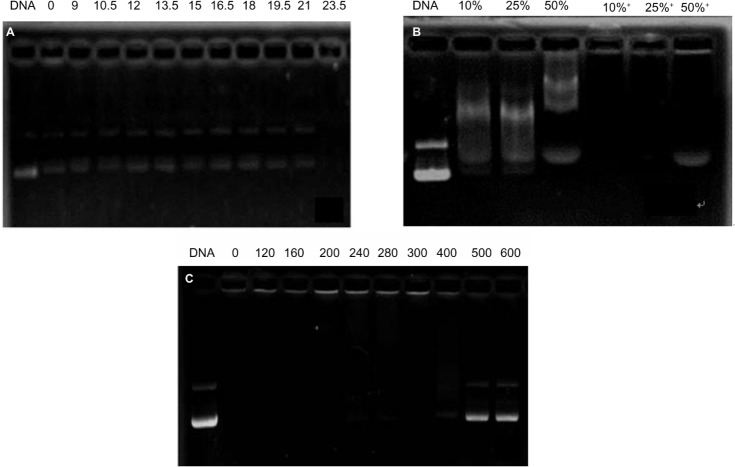 "Protection of OTMCS-PEI-R13 on plasmid DNA. ( A ) Protection of plasmid DNA from degradation by DNase I concentrations of 0, 9, 10.5, 12, 13.5, 15, 16.5, 18, 19.5, 21, and 23.5/μg DNA. ( B ) Protection of plasmid DNA from dissociation by serum at varying concentrations of 10%, 25%, and 50%. The lanes 10%, 25%, and 50% without ""+"" refer to the presence of only 10%, 25%, and 50% serum; the lanes 10%, 25%, and 50% with ""+"" refer to the presence of OTMCS-PEI-R13/DNA complex at a w/w ratio of 20 with different concentrations of serum. ( C ) Protection of plasmid DNA from dissociation by sodium heparin at varying concentrations of 0, 120, 160, 200, 240, 280, 300, 400, 500, and 600 μg/mL. Abbreviations: OTMCS, N-octyl-N-quaternary chitosan; PEI, polyethylenimine; R13, RGDC-TAT (49–57); w/w, weight/weight."
