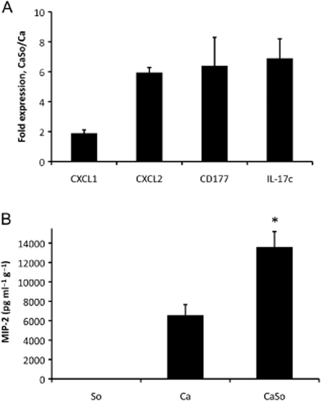 Analysis of inflammatory gene and protein expression in tongue tissues.A. Two chemokines (CXCL1, CXCL2), a neutrophil-specific antigen (CD177) and an epithelial cell-derived neutrophil-activating cytokine (IL-17C) were tested in the same RNA samples surveyed by microarray analysis on day 5 post infection. After cDNA synthesis, equal amounts from three mice per group were mixed and analysed in triplicate by RT-qPCR. All genes were significantly ( P