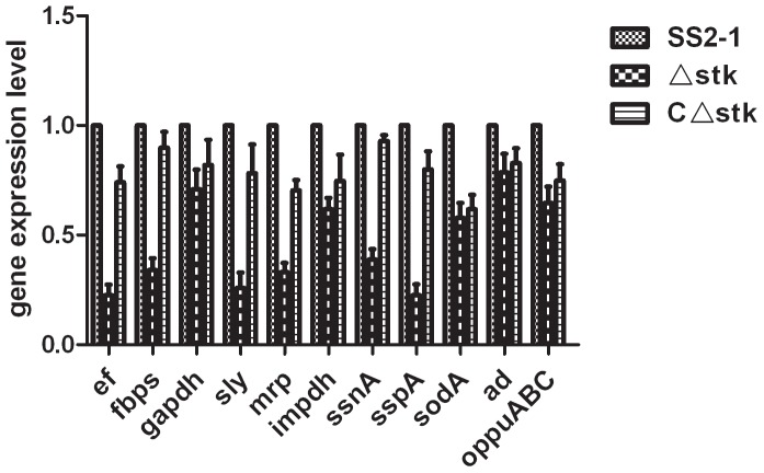 Virulence gene expression of different strains in vitro . Total RNA was extracted from SS2-1, Δ stk and C Δ stk grown in THY medium at an OD600 of 0.6–0.8 and used for qRT-PCR analysis. The mRNA level of each gene was normalized to that of 16S rRNA . Results are shown as relative expression ratios compared to expression in the parental strain SS2-1. Data from three independent assays are presented as the means±SE. Differences between SS2-1 and Δ stk was determined by two-way ANOVA. (**p