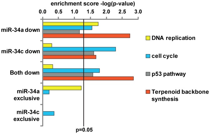 Functional enrichment analysis of miR-34a and miR-34c. KEGG pathway enrichment for subsets of miR-34a and miR-34c targets (for all proteins down-regulated log2
