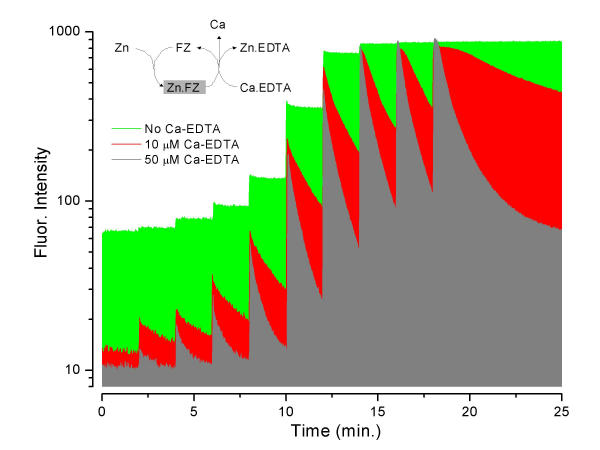 Titration of FluoZin-3 with Zn in the presence and absence of Ca-EDTA . The ZnSO 4 additions beginning at 2 minutes and at 2 minute intervals were 0.001, 0.0032, 0.01, 0.032, 0.1, 0.32, 1, 3.2 and 10 μM. 500 nM FluoZin-3 in Hepes saline at 26°C.