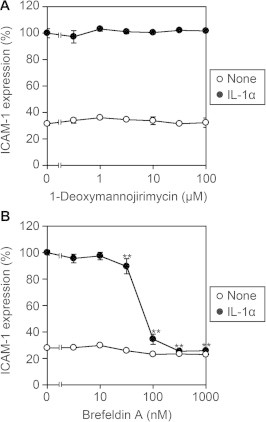Brefeldin A, but not 1-deoxymannojirimycin, inhibits IL-1α-induced cell-surface <t>ICAM-1</t> expression. A549 cells were preincubated with various concentrations of 1-deoxymannojirimycin (A) or brefeldin A (B) for 1 h and then incubated with IL-1α (0.25 ng/ml) for 6 h. Cell-surface ICAM-1 expression was measured by the Cell-ELISA assay. ICAM-1 expression (%) is represented by the means ± S.D. of triplicate cultures. ∗∗ P
