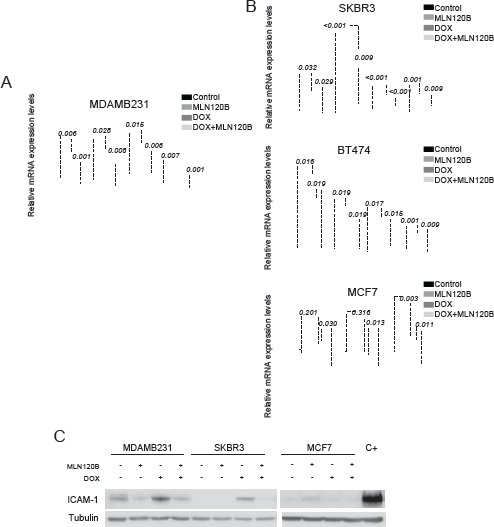 NF-κB -driven transcription by doxorubicin differs among breast cancer cells Four genes ( IL8 , ICAM-1 , CXCL-1 and TNFAIP3 ) were chosen for validation of the microarray results by qRT-PCR. Cells were treated as for the microarray experiment: A, MDA.MB-231 B, SKBR3, BT-474 and MCF-7. The relative gene expression level is normalized to the RPLP0 gene. The graph shows the expression of each gene across different experimental conditions relative to their expression in control condition. C, ICAM-1 protein expression was determined in whole cell lysates of MDA-MB-231, SKBR3 and MCF-7 cells treated as for Fig 1e. α-tubulin served as the loading control. Cells treated with TNF-α were used as positive control.