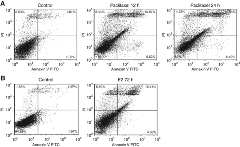 Differential apoptotic effects of E 2 and paclitaxel. MCF7:5C cells were treated with control or ( A ) paclitaxel (1 μ M ) for 12 and 24 h or ( B ) E 2 (1 n M ) for 72 h, and then stained with annexin V-FITC and PI and analysed by flow cytometry. Viable cells (left lower quadrant) are annexin V-FITC− and PI−, early apoptotic cells (right lower quadrant) are annexin V-FITC+ and PI−, dead cells (left upper quadrant) are PI+ and late apoptotic cells (right upper quadrant) are annexin V-FITC+ and PI+. Increased staining for apoptosis is observed maximally in the right upper quadrant.