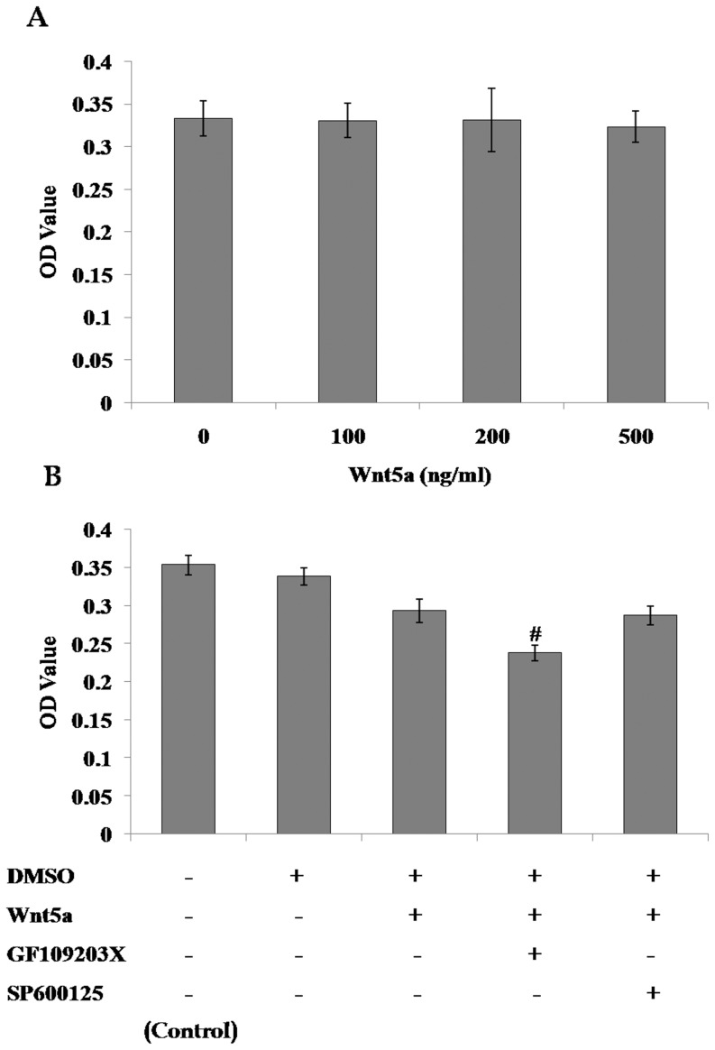 Role of noncanonical Wnt signaling in the proliferation of mMSCs. The proliferation of mMSCs was evaluated using MTT assay after incubation in 2% FBS-DMEM/F12 media supplemented with increasing concentrations of Wnt5a ( A ) or 500 ng/ml Wnt5a plus 5 µmol/L SP600125 or 2.5 µmol/L GF109203X ( B ) for 72 h. ( n = 4; # P