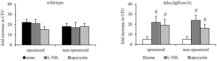 Effect of inhibition of ROS and NO production on the survival of Mtb strains inside MØs. MØs were incubated with apocynin or L-NIL for 30 minutes, then infected with Mtb wild-type or Δ( ku,ligD,recA ) for 2 hours (MOI = 10) and washed with HBSS. On the day of infection and after 6 days of culture, MØs were lysed with Triton X-100 and cell lysates were plated onto <t>Middlebrook</t> <t>7H10</t> agar supplemented with 10% OADC. After 21 days of culture, CFUs were counted. Data are presented as fold increase in CFUs, expressed as means ± SEM (n = 5; #p≤0.04, Δ( ku,ligD,recA ) vs. Δ( ku,ligD,recA ) + apocynin or L-NIL; Mann-Whitney U test).
