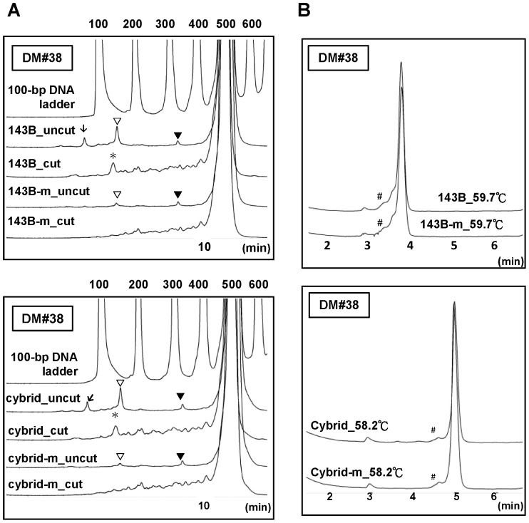 Results from SN/WAVE-HS and DHPLC analysis of the DM#38 amplicon by using total DNA and mtDNA from cells. (A) Results from SN/WAVE-HS analysis. (B) Results from DHPLC analysis. The upper and lower panels of Figure 6A and Figure 6B display the results for 143B cells and the cybrid cells, respectively. In Figure 6A, the results for the DNA samples without (uncut) and with (cut) SN digestion were also compared. ▾ indicates the peaks that appeared in the chromatograms of uncut DNA but were not observed in the chromatograms of the corresponding cut DNA for all DNA samples. ▽ indicates the peaks > 100 bp only present in the chromatograms of the uncut DNA of both total DNA and mtDNA (m), but not the cut DNA. Such peaks for the mtDNA were considerably smaller than those of total DNA. ↓ indicates the peaks