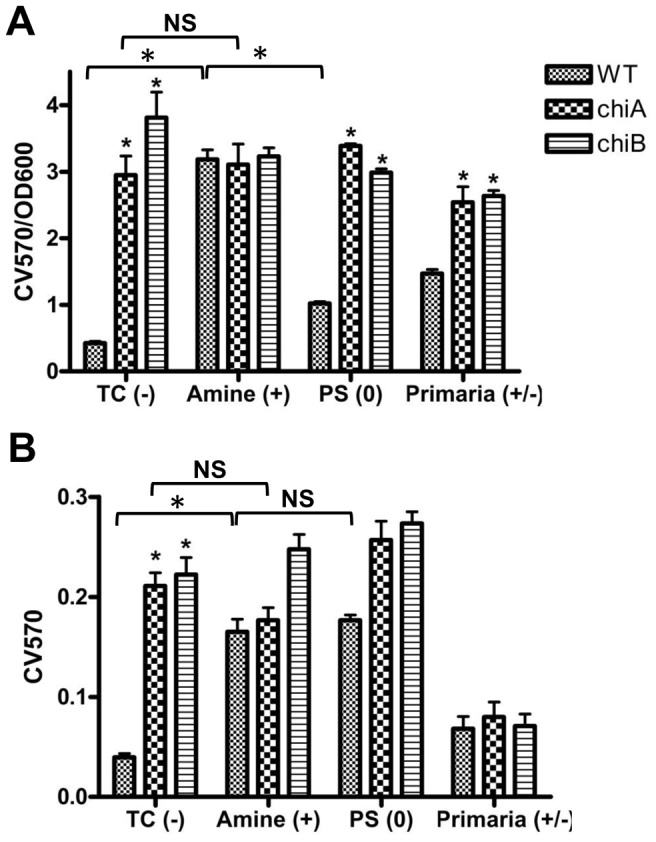 Fn chitinase affects biofilm formation in different surface charged microplates. ( A ) Biofilm formation based on CV staining (CV570) of cells adherent to negatively (TC), positively (Amine), neutral (PS) and positively/negatively (Primaria) charged 96-well plates, normalized by bacterial growth (OD600) expressed as CV570/OD600. ( B ) Attachment was assessed by CV staining 1 h post-inoculation of stationary-phase cultures (OD = 1.0). Initial attachment of Fn WT was very low to the TC and Primaria plates, but high to the amine and PS. *P