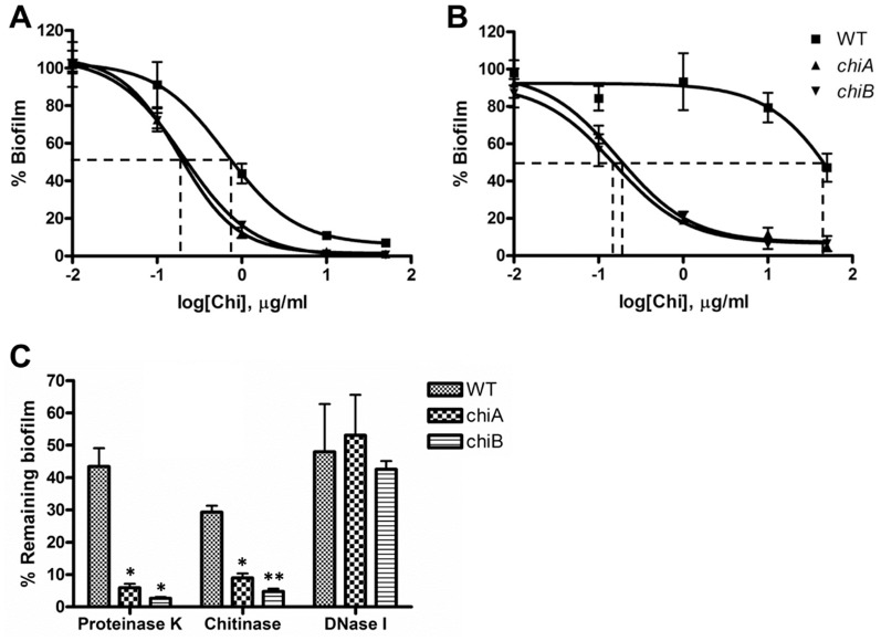 Enzymatic activity of chitinase is required for regulation of Fn biofilm formation. ( A ) Effect of exogenously added chitinase on biofilm formation in the negatively-charged TC plates. EC 50 s of exogenous chitinase to WT, chiA and chiB mutants were determined to be 0.65, 0.18, and 0.21 μg/ml, respectively (n = 6). ( B ) Effect of exogenous chitinase on biofilm formation in the positively-charged amine plates. EC 50 s of chitinase to WT, chiA and chiB mutants were determined to be 87.46, 0.17, and 0.15 μg/ml, respectively (n = 6). ( C ) Detachment of Fn biofilms after exposure to proteinase K, chitinase and DNase I (50 μg/ml) in the TC plates. Untreated control CV 570 values were 0.149±0.032, 0.588±0.012, and 0.585±0.017 for Fn WT, chiA and chiB mutants, respectively. *P