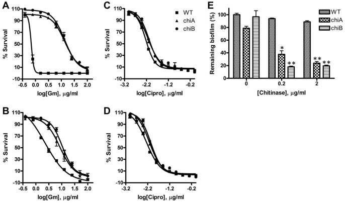 Chitinase alters drug susceptibility of Fn biofilms. ( A, C ) Effect of chitinase on drug susceptibility of biofilms pre-formed in the TC plates to ( A ) gentamicin (Gm) and ( C ) ciprofloxacin (Cipro). ( B, D ) Effect of chitinase on drug susceptibility of biofilms pre-formed in the amine plates to ( B ) gentamicin and ( D ) ciprofloxacin. ( E ) Susceptibility of chitinase-pretreated biofilms to gentamicin. Biofilms were formed on Amine plates in the presence of chitinase (0, 0.2 and 2 μg/ml) for 24 h then Gm (2 μg/ml) was added to the biofilms for 24 h. The remaining bacteria were calculated by the relative bacteria to no Gm-treated control in each concentration of chitinase. *P