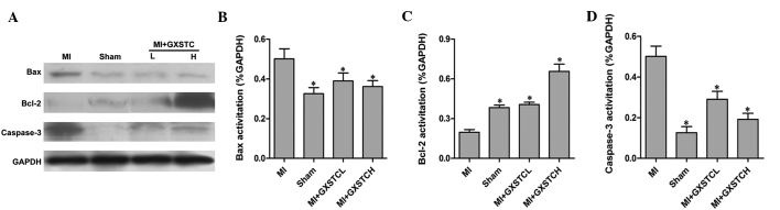 Effect of GXSTC on apoptosis-associated protein expression in all treated groups. (A) Bands correspond to Bcl-2, Bax, caspase-3 and GAPDH. Results of (B) Bax, (C) Bcl-2 and (D) caspase-3 were quantified by densitometry analysis of the bands from (A) and then normalized against GAPDH in the heart tissue. Results were obtained from three independent experiments performed in triplicate. * P