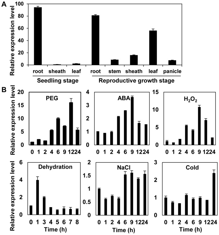 Expression analysis of the OsMYB48-1 gene. (A) qRT-PCR analysis of the expression level of OsMYB48-1 in different tissues of Nipponbare. (B) Expression patterns of OsMYB48-1 under various stress treatments including PEG, ABA, H 2 O 2 , dehydration, NaCl, and cold. Error bars indicate standard error (SE) based on 3 replicates.