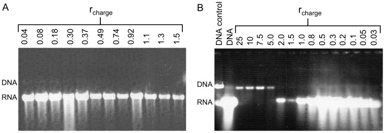 Luciferase gene expression and DNA accessibility as a function of r charge using pre-casted RNA gels. (A) G4 dendrimers and (B) CTAB. The synthesized amounts of RNA are displayed and samples were not pretreated with Dnase I. References are displayed in B where lane 1 shows the sample consisting only of DNA and without any compacting agent or transcriptional activity. Lane 2 shows the control sample containing DNA and the in vitro transcription mixture in the absence of compacting agents. Gels were post-stained using GelStar.