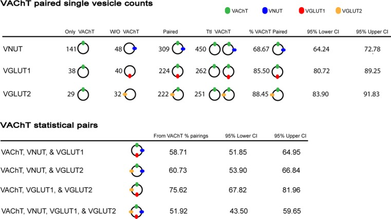 Single‐synaptic vesicle observations of vesicular transporters (VNUT, VGLUT1, or VGLUT2) colabeled with VAChT, and confidence intervals of statistically paired transporters calculated using two‐sided Agresti‐Coull confidence limits.
