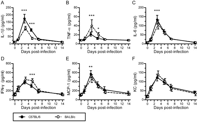 Innate immune responses induced by H7N9 virus infection in C57BL/6 and BALB/c mice. The experimental setup was the same as that described in Figure 2 . (A–F) Levels of IL-1 β, TNF- α , IL-6, IFN-γ, MCP-1, and KC in mouse sera on days 0, 1, 3, 5, 7, and 14 postviral infection, which were measured by ELISA ( n = 6). The data are expressed as the mean ± SD (bar). *, **, and *** indicate P