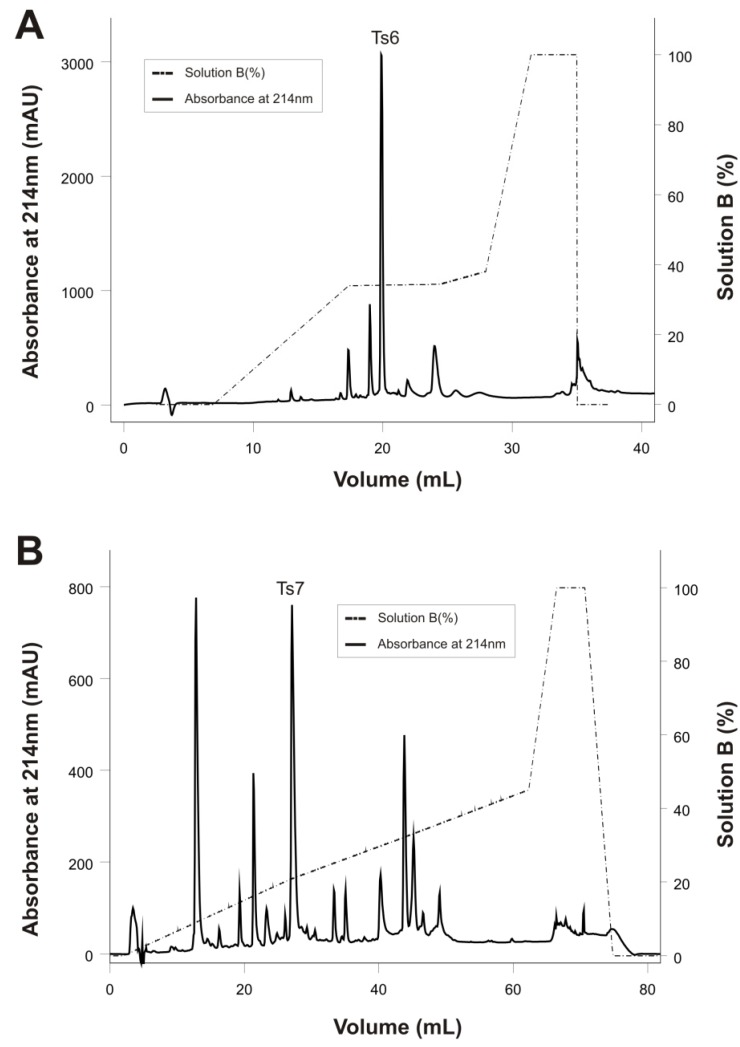 Reversed-phase FPLC of fractions X and XIIA resulting from the improved Ts venom fractionation procedure. The fractions were purified on a C18 column (4.6 mm × 250 mm, 5 µm particles) equilibrated with 0.1% (v/v) of trifluoroacetic acid (TFA). Adsorbed proteins were eluted using a concentration gradient from 0% to 100% of solution B (80% acetonitrile in 0.1% TFA), represented by the dotted line. Flow: 0.8 mL/min. Absorbance was monitored at 214 nm, at 25 °C. ( A ) Fraction X; ( B ) Fraction XIIA.
