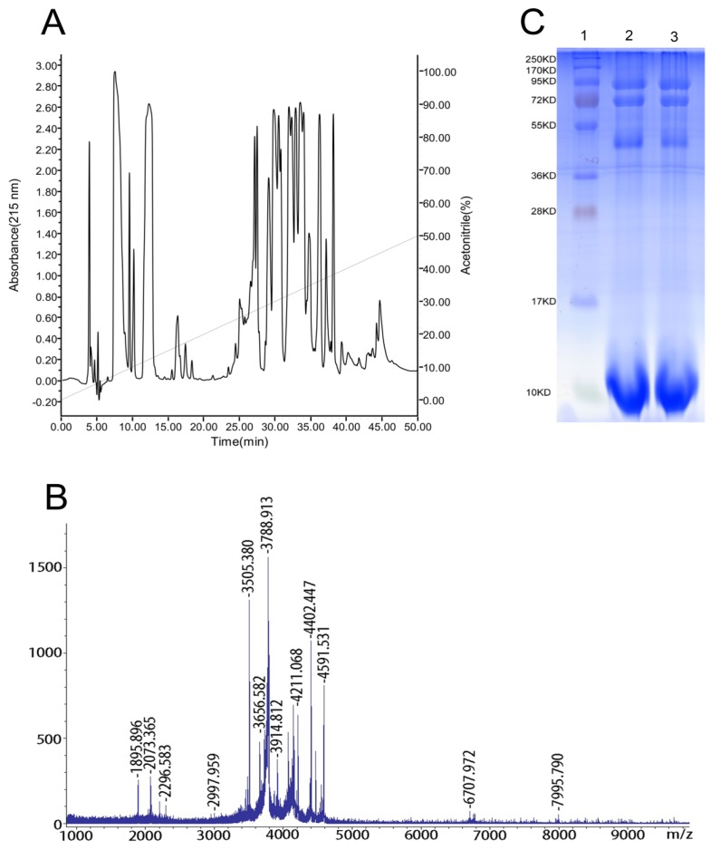The complexity of the venom peptides: ( A ) reversed-phase high-performance liquid chromatography (RP-HPLC) separation of 1 mg of soluble venom from S . jiafu in an analytical C18 column equilibrated with solution A (distilled water in 0.1% TFA), using a gradient from 0% to 50% of solution B (acetonitrile in 0.1% TFA) over 50 min with a flow rate of 1 mL/min. Absorbance was read at 215 nm. ( B ) Matrix-assisted laser-desorption/ionization time-of-flight mass spectrometry(MALDI-TOF-MS) of S . jiafu venom. ( C ) Sodium dodecyl sulfate-polyacrylamide gel electrophoresis (SDS-PAGE) of the venom of the spider S . jiafu . 1: Marker; 2 and 3: Venom.